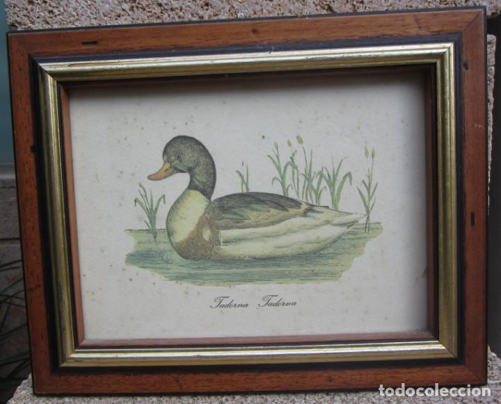 Arte: 2 laminas de patos - Foto 2 - 137790890