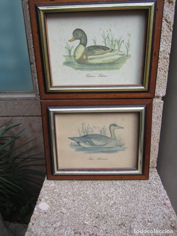 Arte: 2 laminas de patos - Foto 3 - 137790890