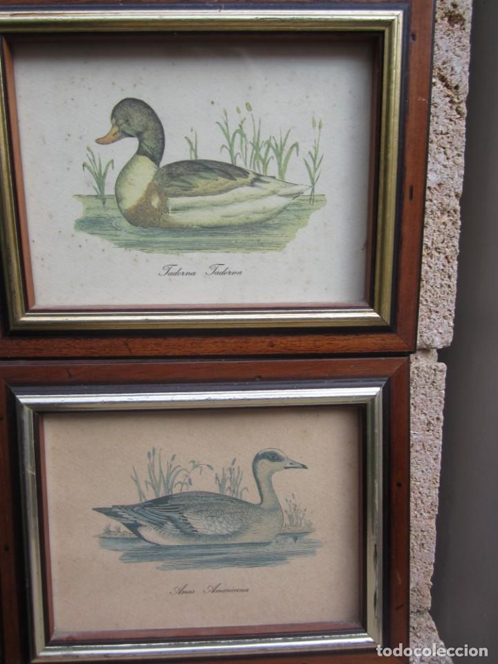 Arte: 2 laminas de patos - Foto 4 - 137790890