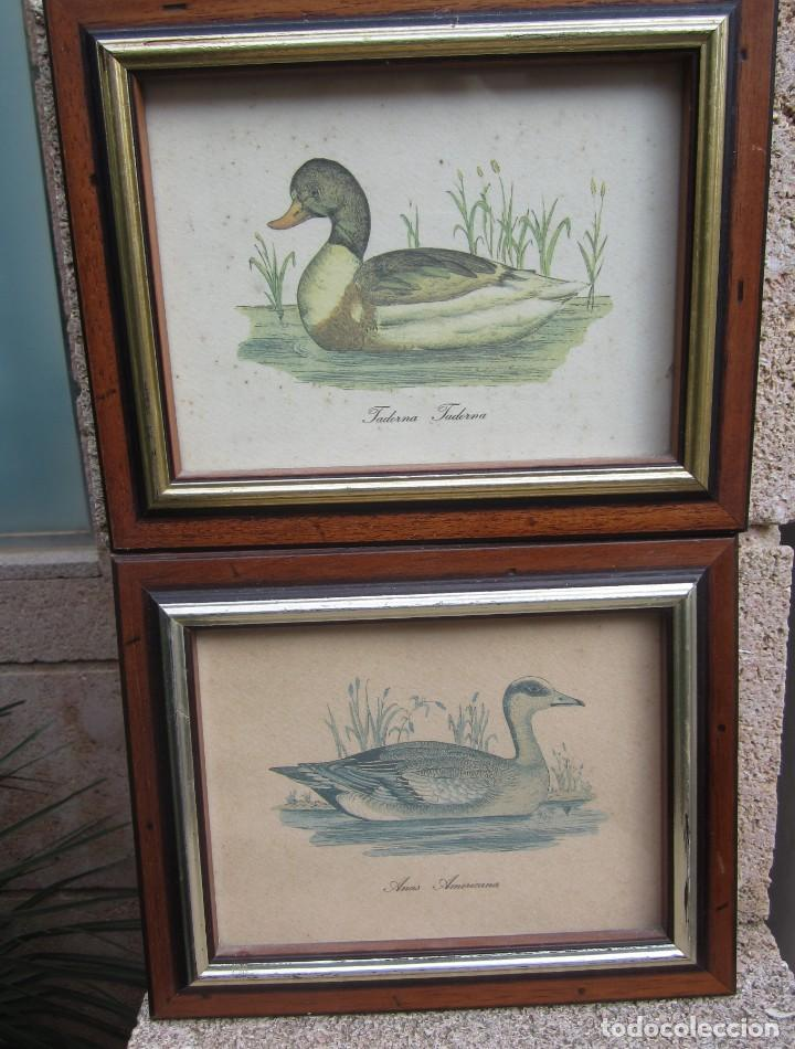 Arte: 2 laminas de patos - Foto 5 - 137790890