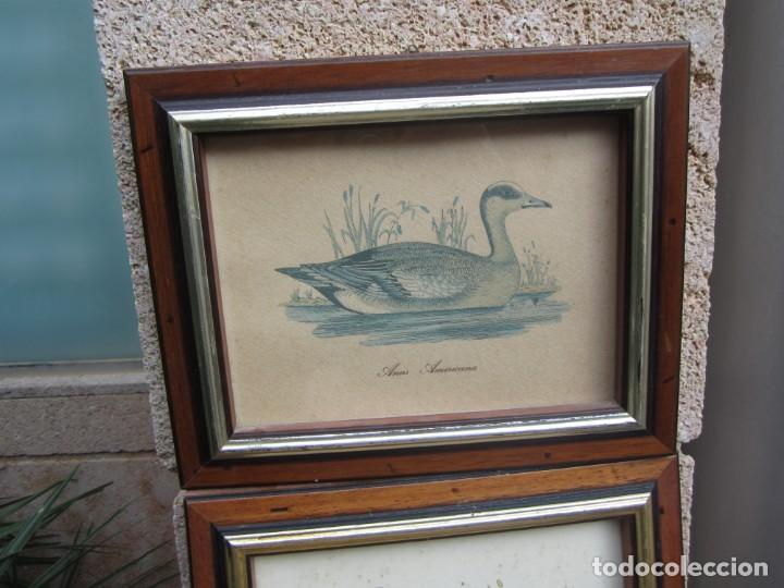 Arte: 2 laminas de patos - Foto 7 - 137790890