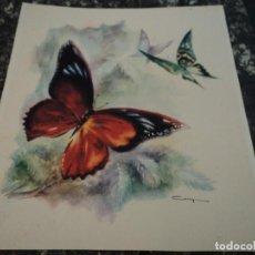 Arte: LAMINA DE MARIPOSAS COTY 34 X 30. Lote 140262718