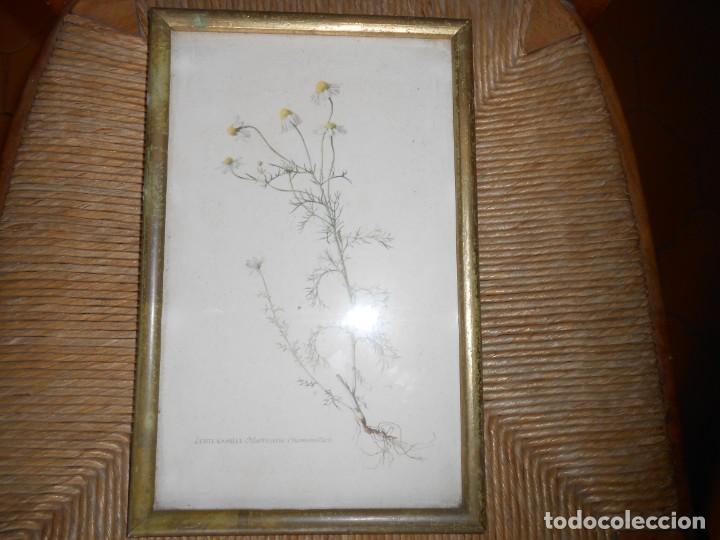 Arte: ECHTE KAMILLE-Matricaria Chamomilla - Foto 2 - 140769538