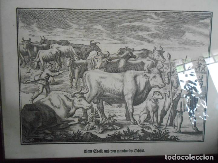 Arte: TRATANTES DE GANADO - Lámina Alemana - - Foto 3 - 140877182