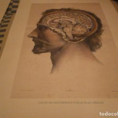 Arte: ANATOMÍA DEL HOMBRE DR BOURGERY PARIS 1831 ED FACSIMIL 2 GRABADOS CABEZA ENCÉFALO. Lote 142343330