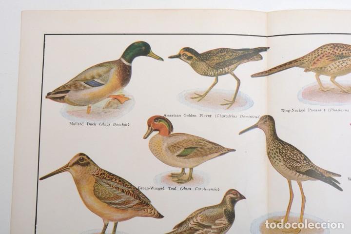 Arte: Póster vintage, Laminas pájaros, poster pájaros, póster aves, póster caza, lámina caza - Foto 2 - 144127110