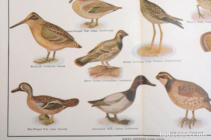 Arte: Póster vintage, Laminas pájaros, poster pájaros, póster aves, póster caza, lámina caza - Foto 3 - 144127110