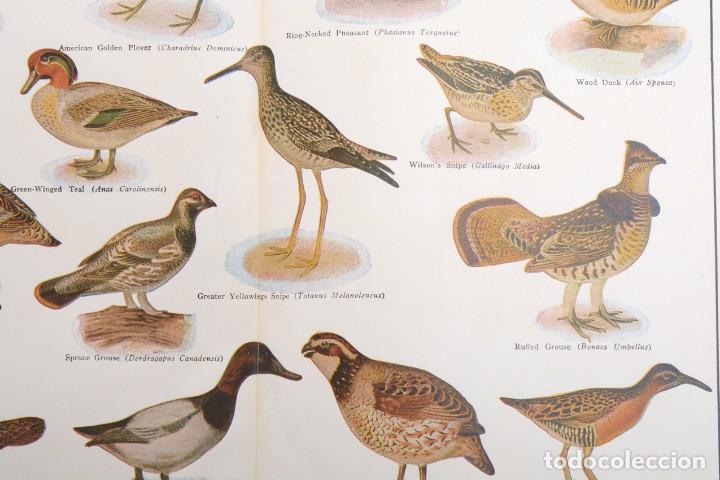 Arte: Póster vintage, Laminas pájaros, poster pájaros, póster aves, póster caza, lámina caza - Foto 4 - 144127110