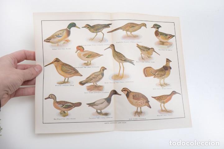 Arte: Póster vintage, Laminas pájaros, poster pájaros, póster aves, póster caza, lámina caza - Foto 5 - 144127110