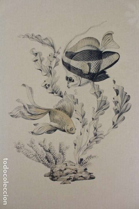 Arte: C- 714.- PAREJA DE LAMINAS PECES. AÑOS 70. MARCO DE MADERA. - Foto 2 - 128637367