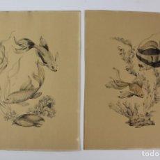 Arte: C- 714.- PAREJA DE LAMINAS PECES. AÑOS 70. MARCO DE MADERA.. Lote 128637367