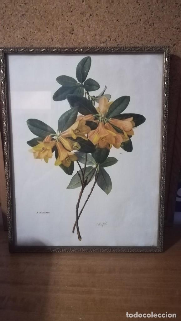 ANTIGUA LAMINA ENMARCADA EN CRISTAL CON MARCO DORADO DE FLORES, FIRMADO (Arte - Láminas Antiguas)