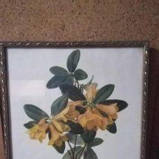 Arte: ANTIGUA LAMINA ENMARCADA EN CRISTAL CON MARCO DORADO DE FLORES, FIRMADO. Lote 148038974