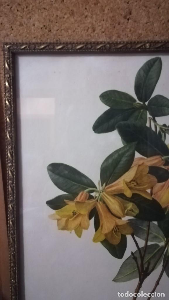 Arte: ANTIGUA LAMINA ENMARCADA EN CRISTAL CON MARCO DORADO DE FLORES, FIRMADO - Foto 2 - 148038974