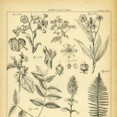 Arte: AGRICULTURA. LÁMINA 168. LITOGRAFÍA ORIGINAL SIGLO XIX. Lote 154178534