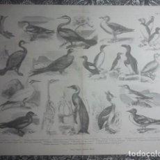 Arte: ZOOLOGÍA - AVES PALMÍPEDAS - PRECIOSA Y EXCLUSIVA LÁMINA ANTIGUA - 34,5 X 27 CMS - IDEAL ENMARCACIÓN. Lote 158865162