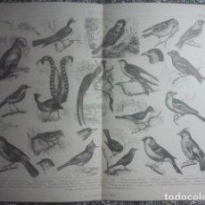 Arte: ZOOLOGÍA - TIPOS DE AVES - PRECIOSA Y EXCLUSIVA LÁMINA ANTIGUA - 34,5 X 27 CMS - IDEAL ENMARCACIÓN. Lote 158865490