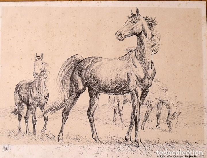 LÁMINA DE CABALLOS. HORSES. BLACK HORSE PRESS 1973. NORTH SALEM. NEW YORK. (Arte - Láminas Antiguas)