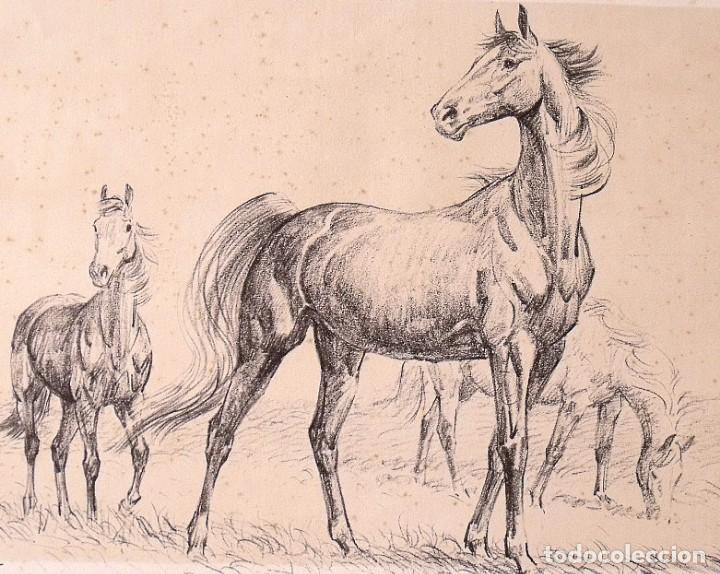 Arte: Lámina de caballos. Horses. Black Horse Press 1973. North Salem. New York. - Foto 2 - 167436220