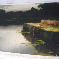 Arte: LAMINA ANTIGUA ENRIQUE SERRA TEMA TARDE EN LAS LAGUNAS PONTINAS. Lote 174081314