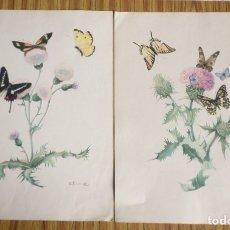 Arte: 2 LAMINAS IMPRESAS ANTIGUAS DE MARIPOSAS. Lote 176222670