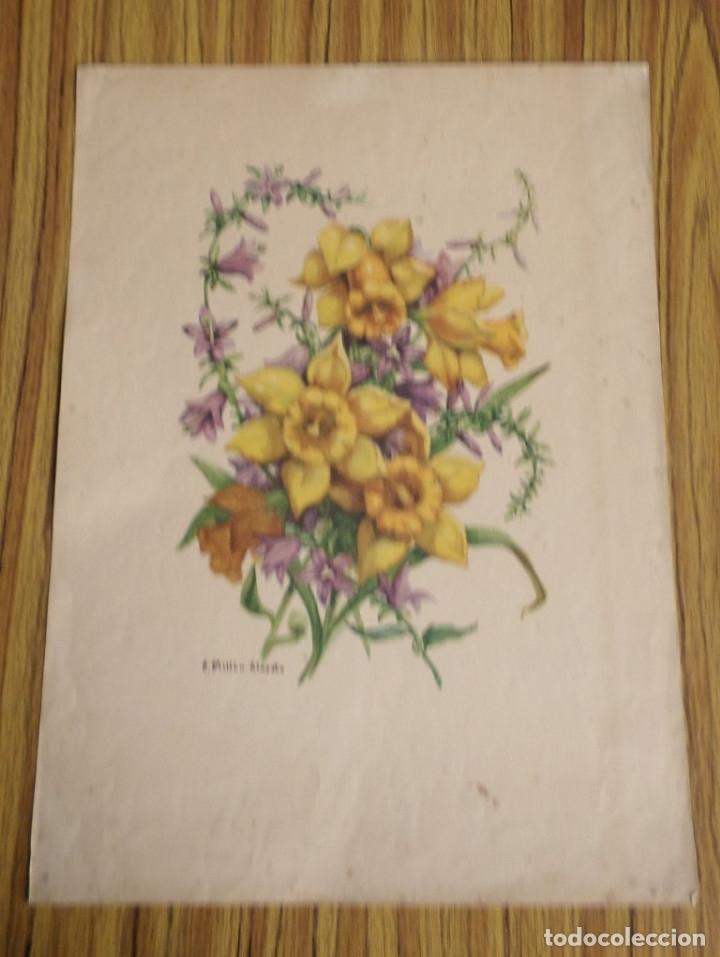 Arte: 3 laminas impresas antiguas plantas - Foto 2 - 176222760