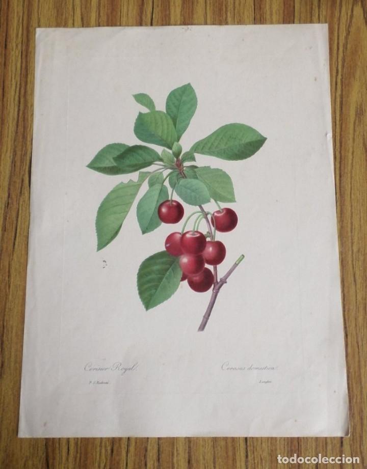 Arte: 3 laminas impresas antiguas plantas - Foto 6 - 176222760