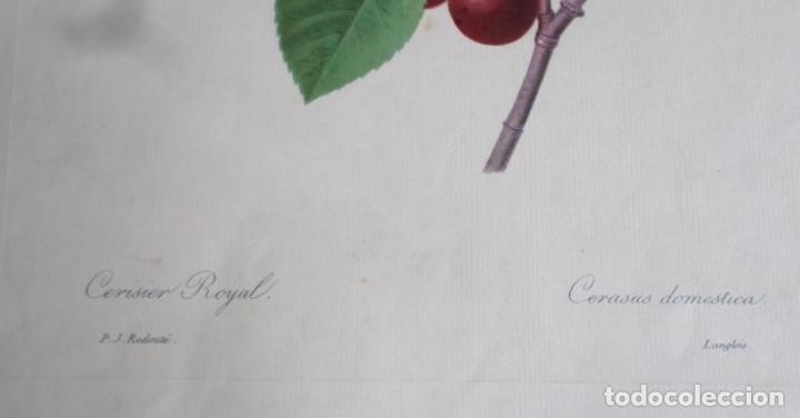 Arte: 3 laminas impresas antiguas plantas - Foto 7 - 176222760