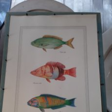 Arte: LAMINA, PECES DEL MEDITERRÁNEO PESCA NATURAL. Lote 179086212