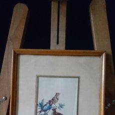 Arte: 5 LAMINAS DE AVES. ENMARCADAS.. Lote 194694453