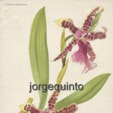 Arte: ORQUÍDEAS. LOTE DE DOS (2) LÁMINAS ANTIGUAS DE BOTÁNICA. SIGLO XIX-XX.. Lote 47700090