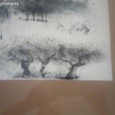 Arte: LAMINA ENMARCADA CON CRISTAL. Lote 205445340