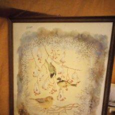 Arte: LAMINA IMAGEN DE PAJARITOS,J.WEBER VERDIER ET MÉSANGES NOIRES,ENMARCADO.. Lote 206384415