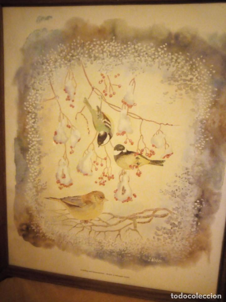 Arte: Lamina imagen de pajaritos,j.weber verdier et mésanges noires,enmarcado. - Foto 2 - 206384415