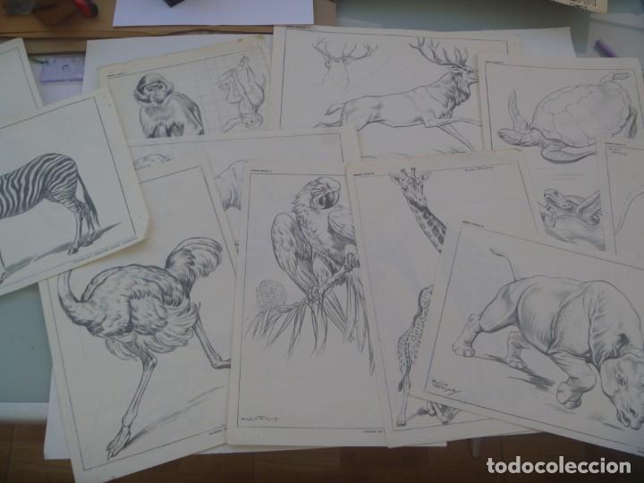 LOTE DE 12 LAMINAS DE DIBUJO DE SUCESOR DE E. MESEGUER, BARCELONA: SERIE XXXII: ANIMALES DE FREIXAS (Arte - Láminas Antiguas)