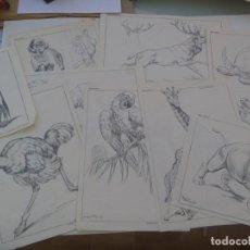Arte: LOTE DE 12 LAMINAS DE DIBUJO DE SUCESOR DE E. MESEGUER, BARCELONA: SERIE XXXII: ANIMALES DE FREIXAS. Lote 209105715