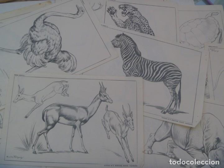Arte: LOTE DE 12 LAMINAS DE DIBUJO DE SUCESOR DE E. MESEGUER, BARCELONA: SERIE XXXII: ANIMALES DE FREIXAS - Foto 2 - 209105715