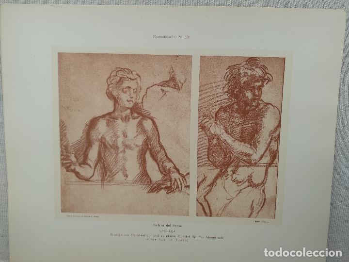 ESTUDIOS DE ANDREA DEL SARTO, MEISTER ALBERTINA, PLANCHA Nº 79 (Arte - Láminas Antiguas)