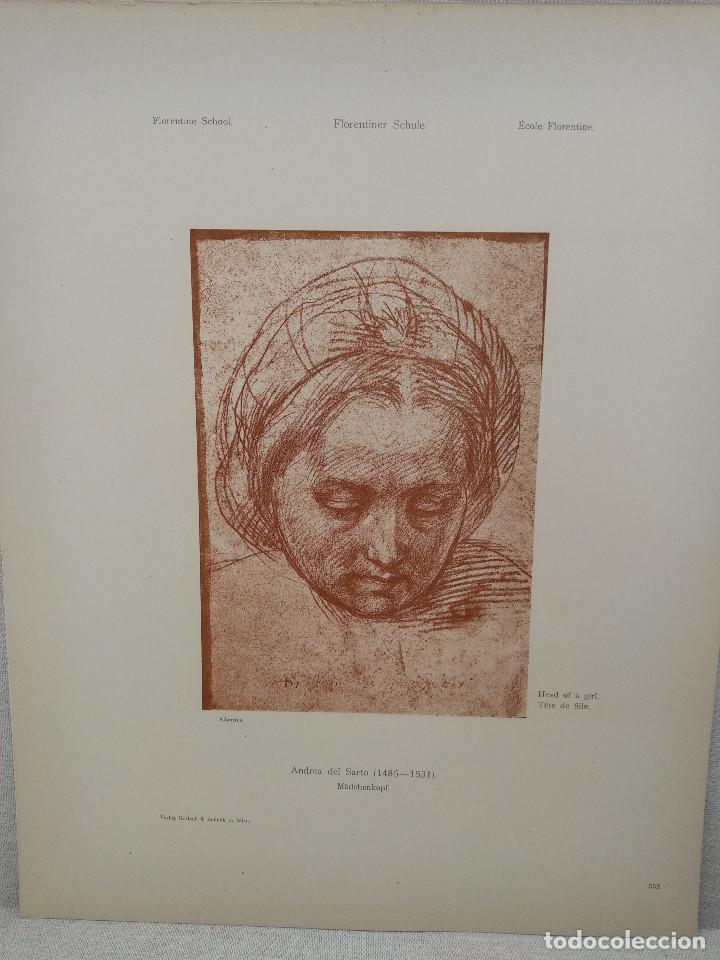 ESTUDIOS DE CABEZA DE ANDREA DEL SARTO, MEISTER ALBERTINA, PLANCHA Nº 562 (Arte - Láminas Antiguas)