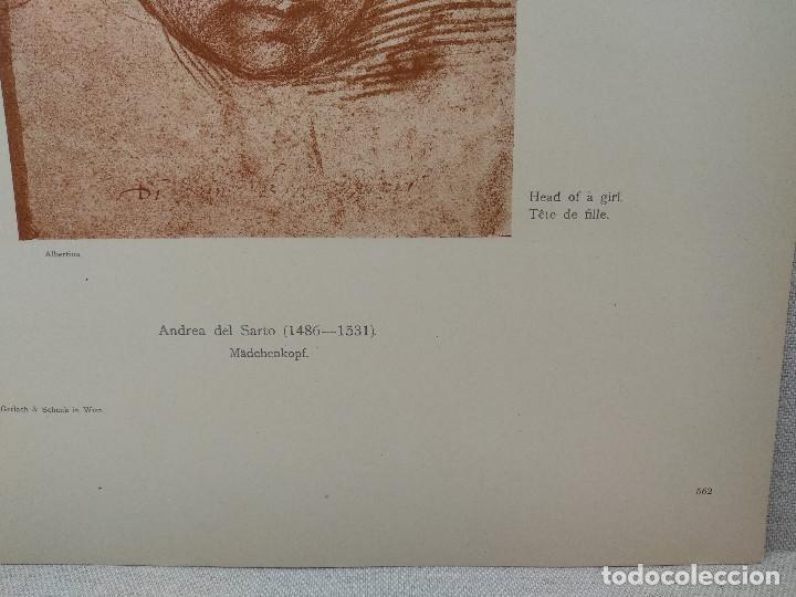 Arte: Estudios de cabeza de Andrea del Sarto, Meister Albertina, plancha nº 562 - Foto 3 - 237134675