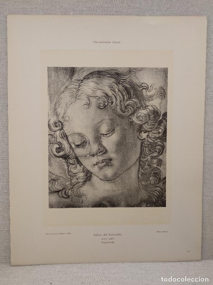 ESTUDIO DE CABEZA DE ANGEL ANDREA DEL VERROCHIO, MEISTER ALBERTINA, PLANCHA Nº 134 (Arte - Láminas Antiguas)
