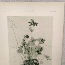 Arte: ESTUDIO DE PLANTAS, COLUMBINE, DE ALBRECHT DURERO, MEISTER ALBERTINA, PLANCHA Nº 447. Lote 240478820