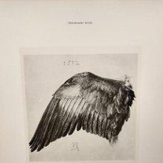 Arte: ALA DE PAJARO DE ALBRECHT DURERO, MEISTER ALBERTINA, PLANCHA Nº 166. Lote 240668225