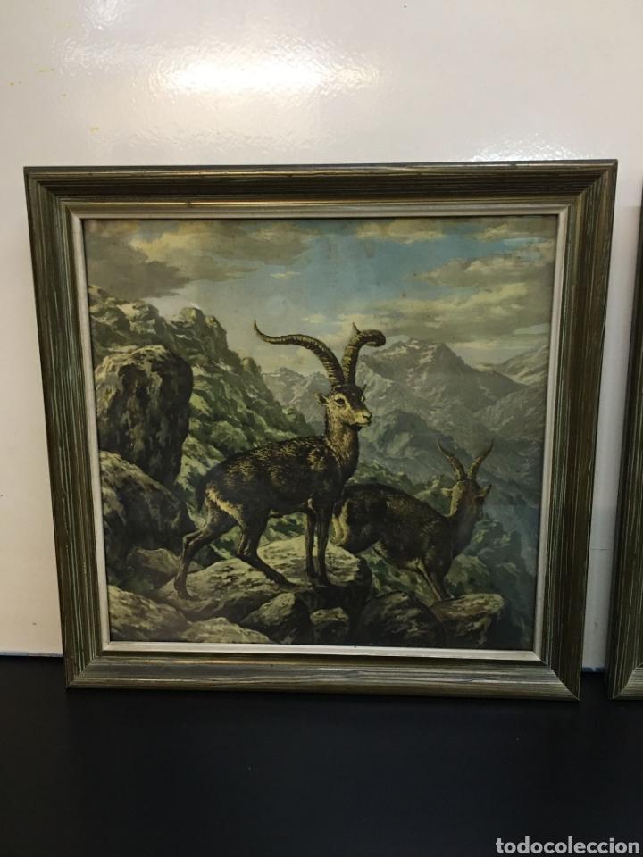 Arte: Antiguos Dibujos en lámina de animales salvajes enmarcados en cristal, borde en madera lujo - Foto 3 - 261261865