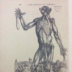 Arte: TEMA: MEDICINA DE ANDREAS VESALIUS.. Lote 287185973