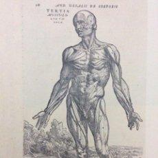 Arte: TEMA: MEDICINA DE ANDREAS VESALIUS. Lote 287186048
