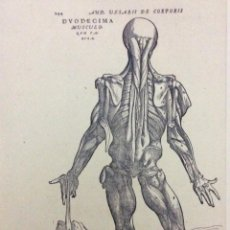 Arte: TEMA: MEDICINA DE ANDREAS VESALIUS. Lote 287186158