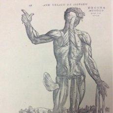 Arte: TEMA: MEDICINA DE ANDREAS VESALIUS. Lote 287191563