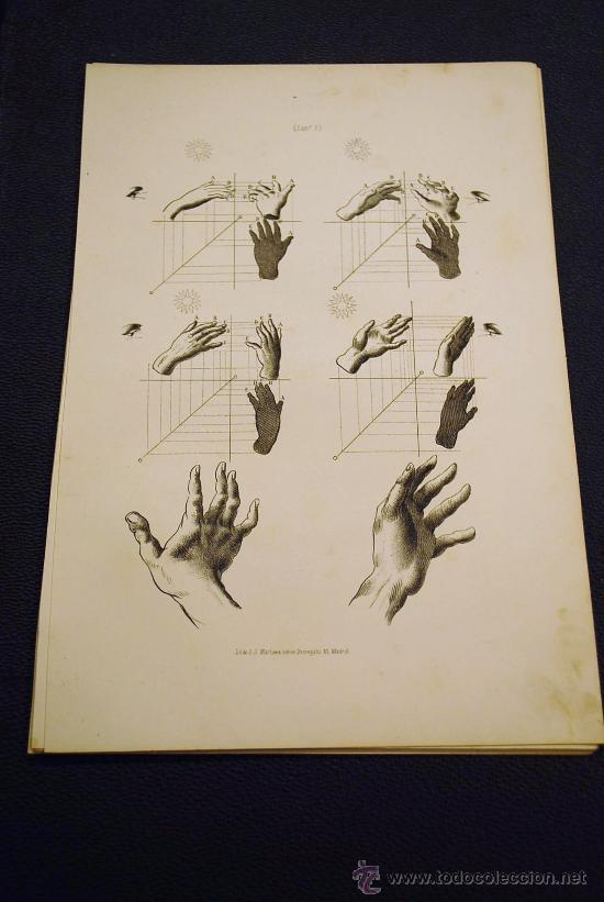 anatomía. partes del cuerpo humano. manos. lito - Comprar ...