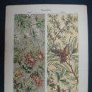 Arte: LITOGRAFÍA. DECORACIÓN. FLORES, PLANTAS. 25 X 35 CM. . Lote 23435134